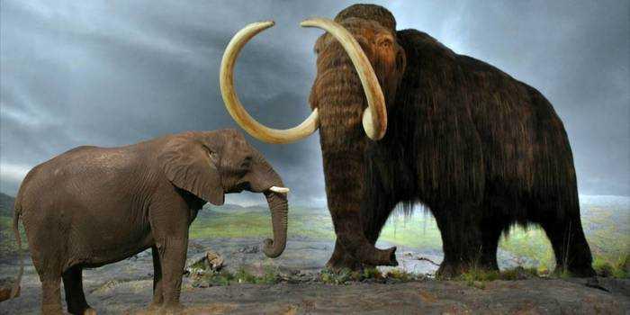 Мамонт и слон