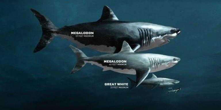 Prehistoric Sharks  Sharkopedia