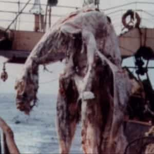 Туша, вытащенная японскими рыбаками