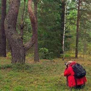 Искривленные деревья