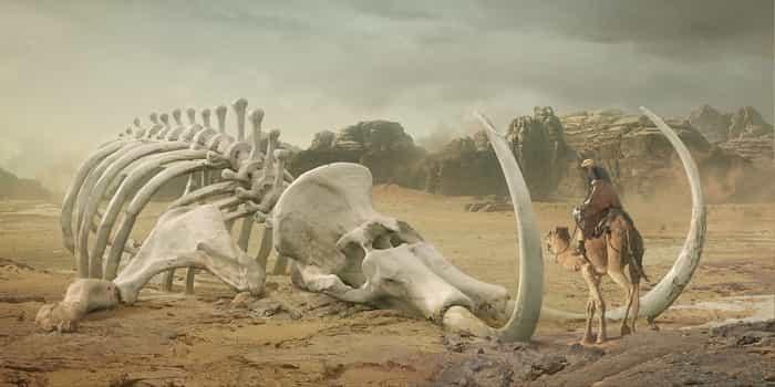 Животные древнего мира мамонты от появления до исчезновения
