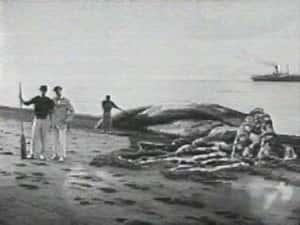 Огромная туша на берегу