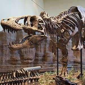 Реконструированный скелет теропода