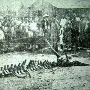 Обнаружение скелета в городе Чжанцзякоу