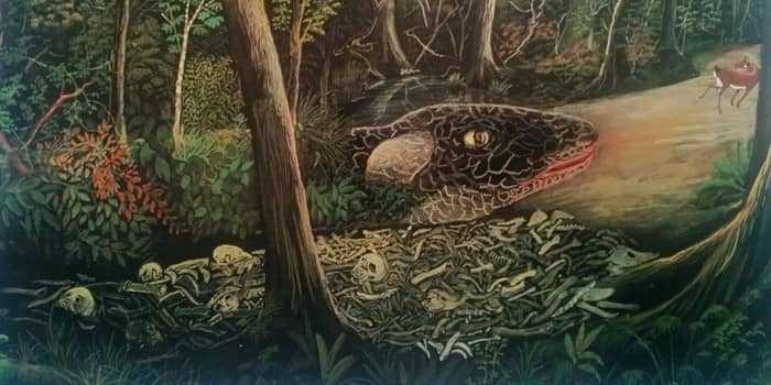 Мбои-тата - огненная змея