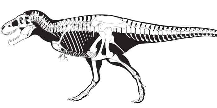 Скелет гигантского динозавра
