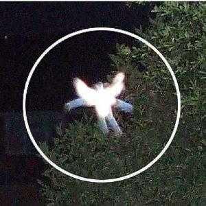 Летающие феи в Англии