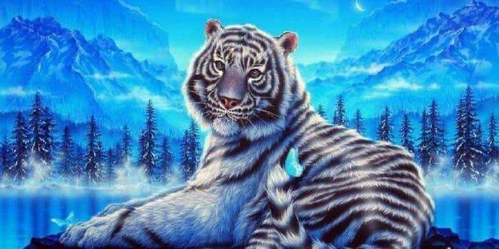 Голубой мальтийский тигр