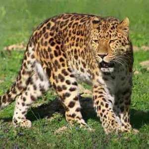 Вымершее животное