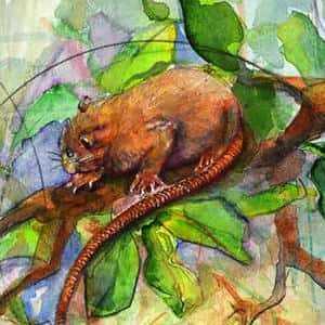 Мифический грызун Vika