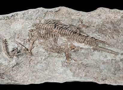 Останки плезиозавра