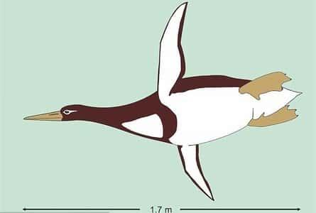 Предполагаемые размеры пингвина