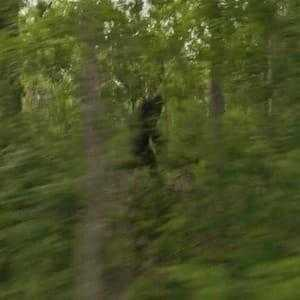 Бигфут бежит