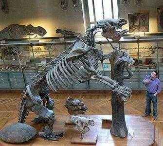 Скелет мегатерия в музее