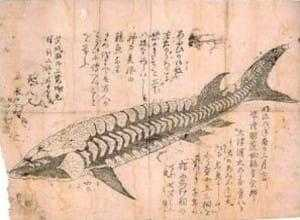 Японская Драконья рыба