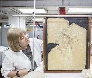 Изучение скелета археоптерикса