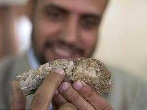 Кость титанозавра