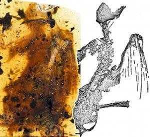 Скелет птицы колибри-пчелка в янтаре