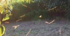 Дневные летающие стержни