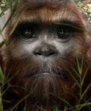 Голова примата