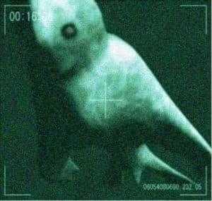 Снимок Нингена под водой