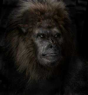 Дьявольская обезьяна
