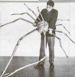 Гигантский японский краб-паук