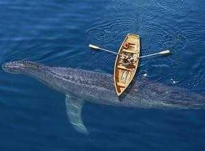 Кадборозавр и лодка