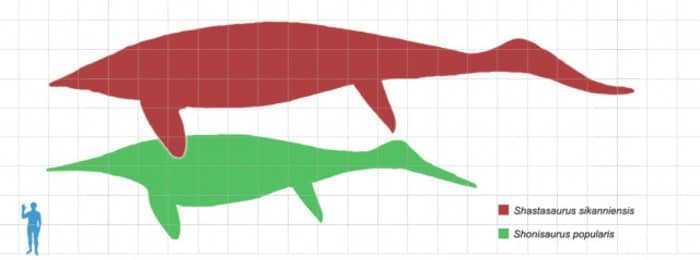 Размеры человека и шастазавра