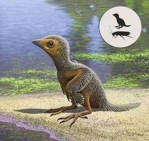 Размеры доисторического птенца