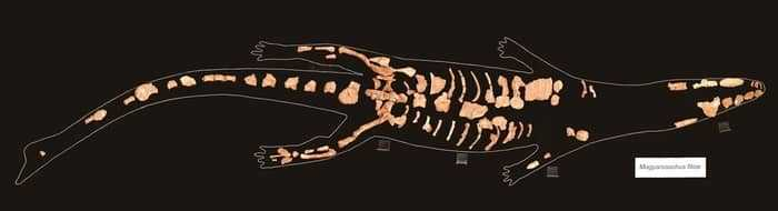 Скелет Magyarosuchus fitosi