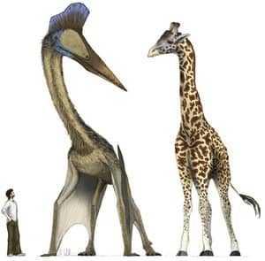 Птерозавр, жираф и человек