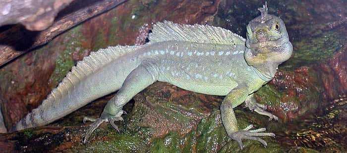 Лепидозавр