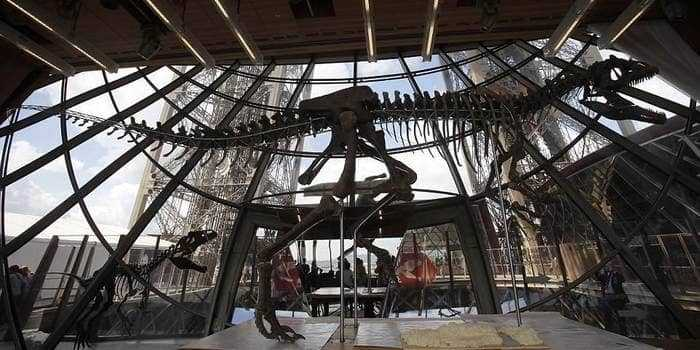 Скелет динозавра в музее