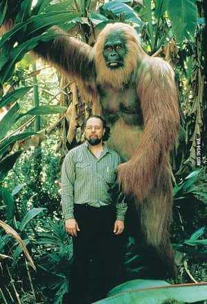 Модель Gigantopithecus blacki