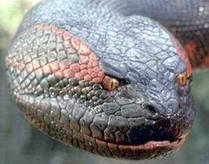Голова гигантской змеи