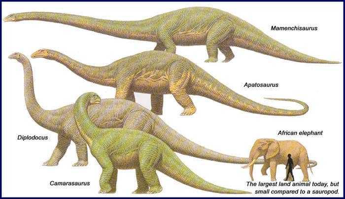 Сравнительные размеры зауроподов