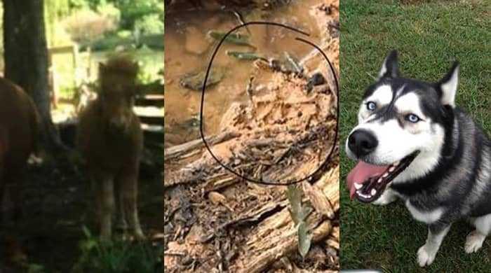 Убийства животных в округе Монро, штат Кентукки