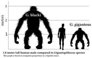 Человек и гигантопитек блэкки