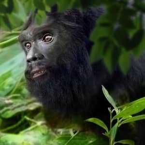 Лицо бигфута