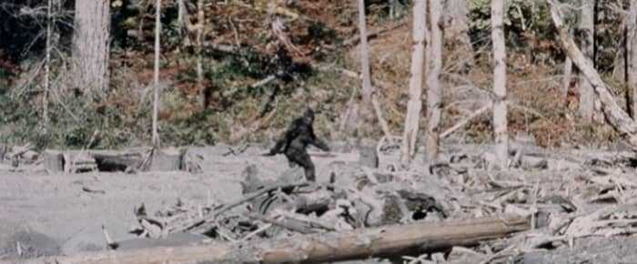 Кадр из фильма Паттерсона