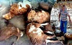 Убийства домашних животных в Индии
