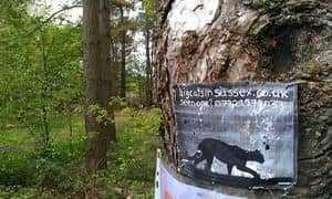 Черная кошка на объявлении