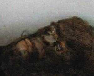 Голова бигфута