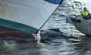 Корабль столкнулся с китом