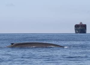 Паром и кит