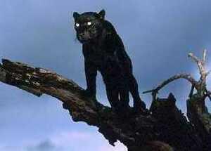 Большая черная кошка