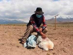 Фермер и мертвое животное