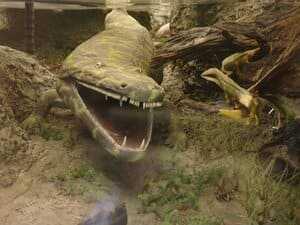 Гигантская саламандра