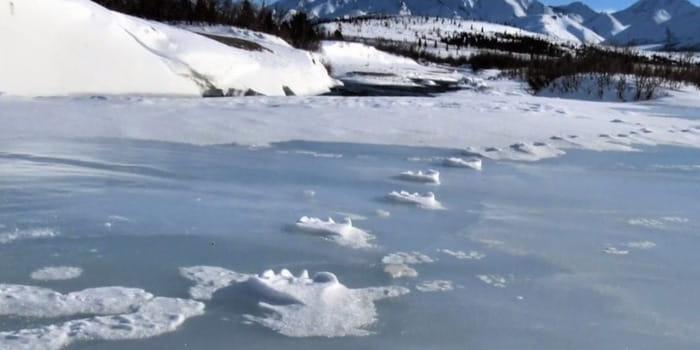 Следы волка на льду